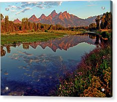 Teton Wildflowers Acrylic Print by Scott Mahon