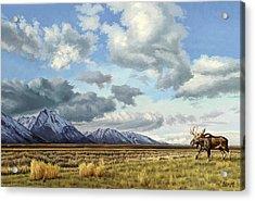 Tetons-moose Acrylic Print