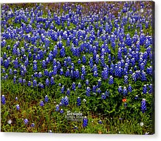Acrylic Print featuring the photograph Texas Bluebonnets #0484 by Barbara Tristan