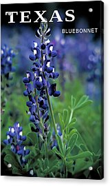 Acrylic Print featuring the mixed media Texas Bluebonnet State Flower by Daniel Hagerman