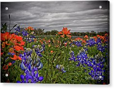 Texas Bluebonnets Acrylic Print by Jill Smith