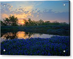 Texas Bluebonnets Acrylic Print by Mark Alder