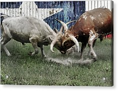Texas Bull Fight  Acrylic Print
