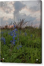 Texas Coastal Prairie Wildflower Sunset Acrylic Print by Joshua House