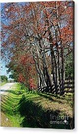 Acrylic Print featuring the photograph Texas Fall by Lori Mellen-Pagliaro