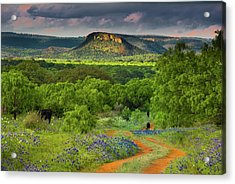 Texas Hill Country Ranch Road Acrylic Print by Darryl Dalton