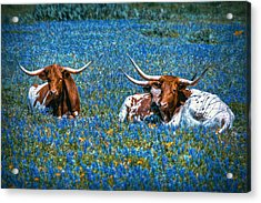 Texas In Blue Acrylic Print