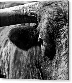 Texas Longhorn Bulls Eye Acrylic Print by  Onyonet  Photo Studios