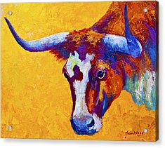 Texas Longhorn Cow Study Acrylic Print by Marion Rose