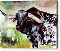 Texas Longhorn Portrait Acrylic Print