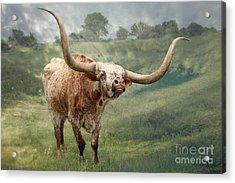 Texas Longhorn - Pride Acrylic Print
