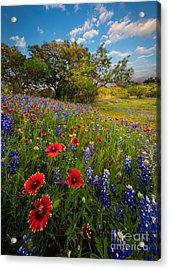 Texas Paradise Acrylic Print by Inge Johnsson