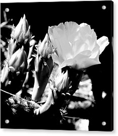Texas Rose IIi Acrylic Print by James Granberry