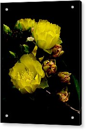 Texas Rose Vii Acrylic Print by James Granberry