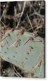 Acrylic Print featuring the photograph Texas Spikes by Laddie Halupa