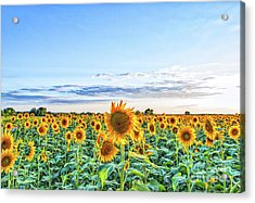 Texas Sunflowers Farm Acrylic Print