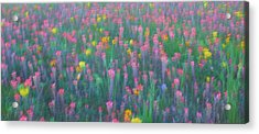 Texas Wildflowers Abstract Acrylic Print