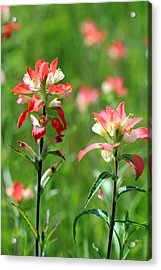 Texas Wildflowers Acrylic Print