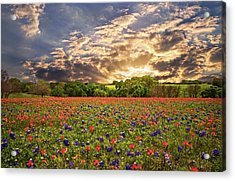 Texas Wildflowers Under Sunset Skies Acrylic Print by Lynn Bauer