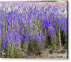 Texas Wildseed Farm Acrylic Print