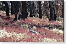 Texture Of Recovery Acrylic Print