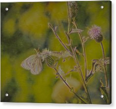 Textured Butterfly 1   Acrylic Print by Leif Sohlman