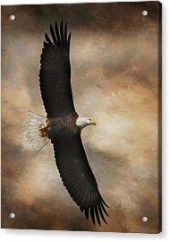 Textured Eagle Acrylic Print by Lori Deiter