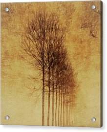 Acrylic Print featuring the mixed media Textured Eerie Trees by Dan Sproul
