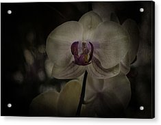 Acrylic Print featuring the photograph Textured Flower by Ryan Photography