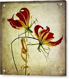 Textured Gloriosa Lily. Acrylic Print