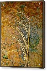 Textured Nature Acrylic Print