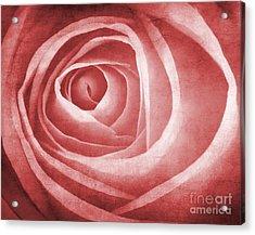 Textured Rose Macro Acrylic Print by Meirion Matthias