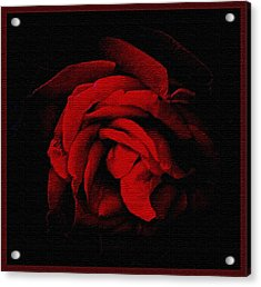 Textured Rose Acrylic Print by Russ Mullen