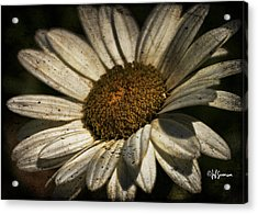 Textured White Flower Acrylic Print by Jeff Swanson