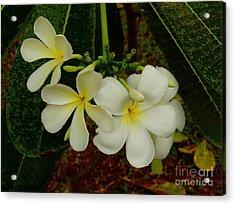 Thai Flowers II Acrylic Print by Louise Fahy
