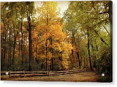 Thain Forest Autumn Trail Acrylic Print by Jessica Jenney