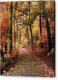 Thain Forest Trail Acrylic Print