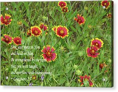 Acrylic Print featuring the photograph Thanksgiving by Robyn Stacey