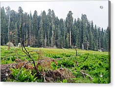 Acrylic Print featuring the photograph Tharps Log Meadow by Kyle Hanson