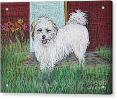 That Little White Dog Acrylic Print by Reb Frost