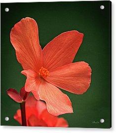 That Orange Flower Acrylic Print