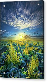 That Voices Never Shared Acrylic Print by Phil Koch