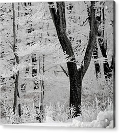 That Winter Acrylic Print by Odd Jeppesen