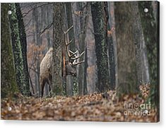That's The Spot Acrylic Print by Andrea Silies