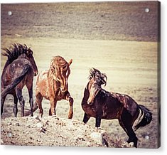 Acrylic Print featuring the photograph The 3 Amigos by Mary Hone