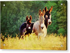 The A Family Acrylic Print by Darren Fisher