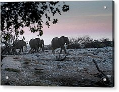 Acrylic Print featuring the digital art The African Elephants by Ernie Echols