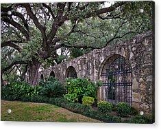 The Alamo Oak Acrylic Print