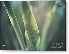 The Allotment Project - Sweetcorn Leaves Acrylic Print