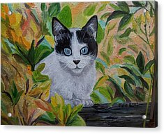 The Ambush - Cat In The Bushes Acrylic Print by Julie Brugh Riffey
